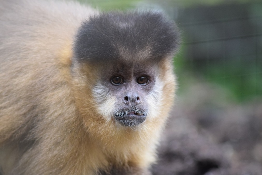 Sheryll Murray MP Chooses The Monkey Sanctuary for £1k Donation